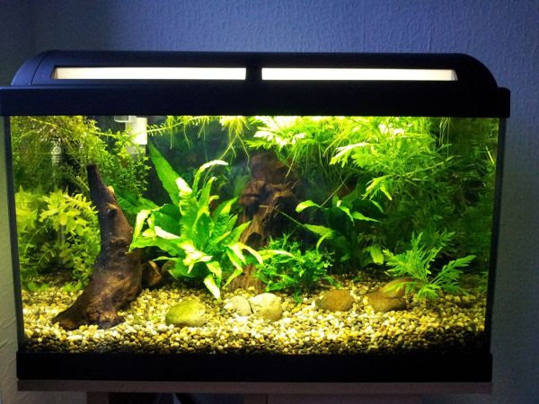 Tropical aquarium designs offer plenty of color and wide variety ...
