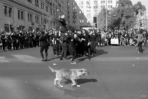 El perrito en la obra callejera by Alejandro Bonilla