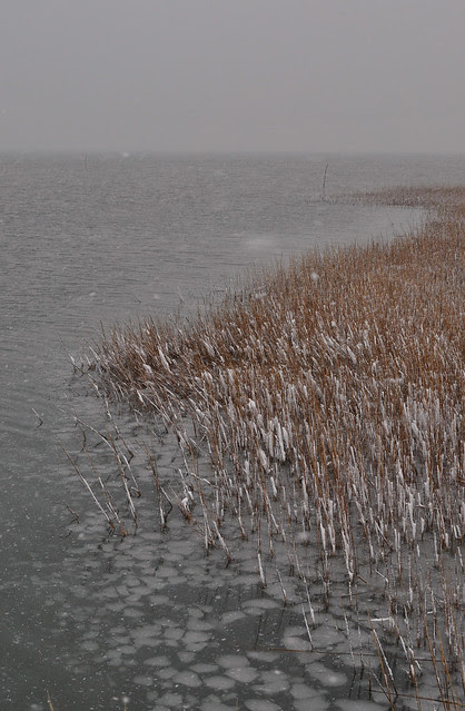 Cold Marsh