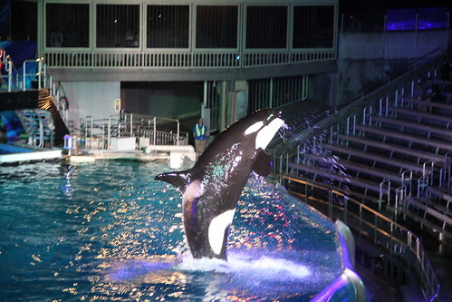 Shamu greets his guests (no one wanted to get wet)