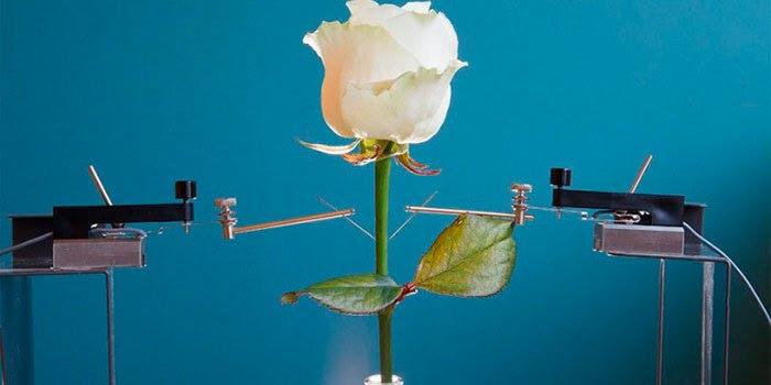 rosas-eletronicas_01