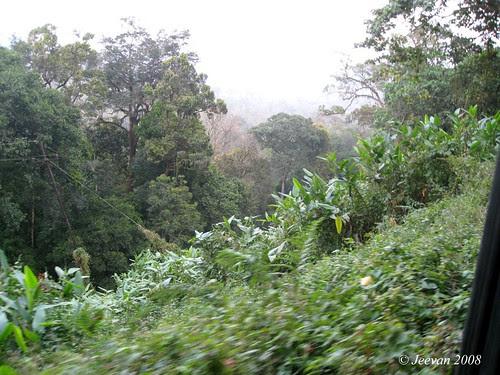 Sholayar Rainforest