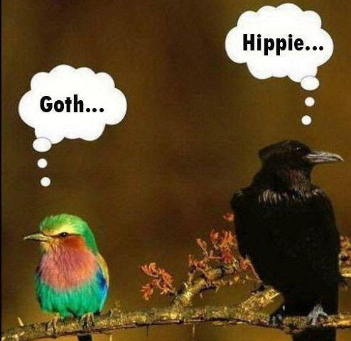 Snobby Birds Funny Pictures Quotes Pics Photos Images Videos