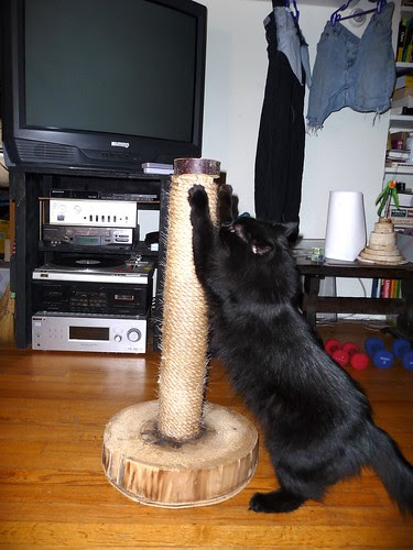 Mister Blackie Tests the Scratching Post