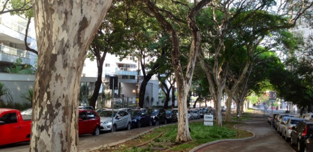 Árvores pau-ferro ao lado de avenida em Belo Horizonte (MG)