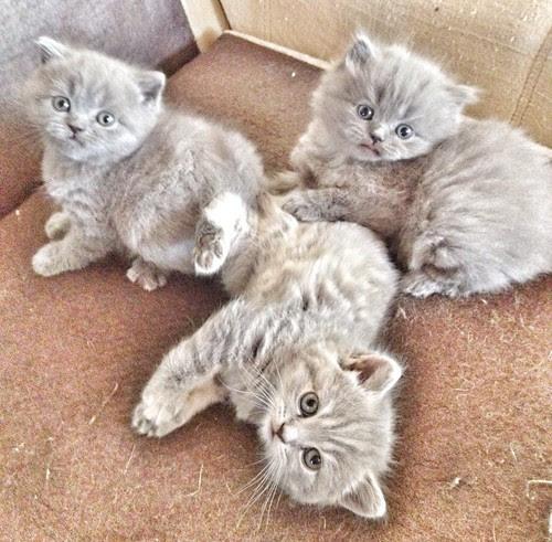 the cutest trio