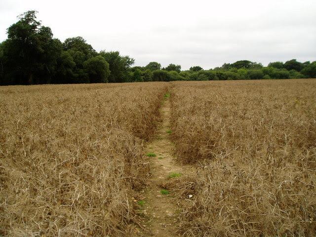 agriculture short definition