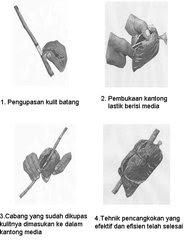 image61 Reproduksi Vegetatif pada Tumbuhan