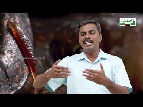 வகுப்பு 10 அறிவியல் அலகு 13 உயிரினங்களின் அமைப்பு நிலைகள் அட்டை Kalvi TV
