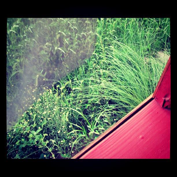 Weeds of Green