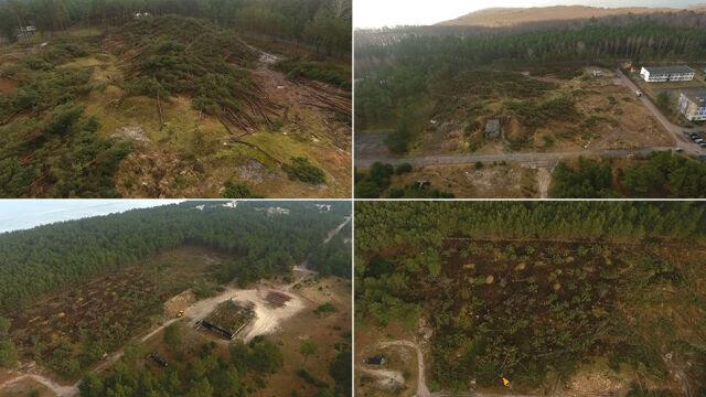 Cztery hektary drzew w Łebie wycięte w dwa dni