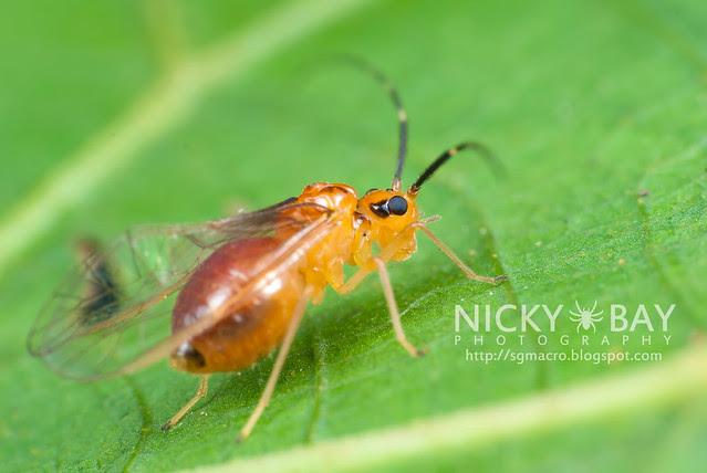 Barklouse (Psocoptera) - DSC_3727
