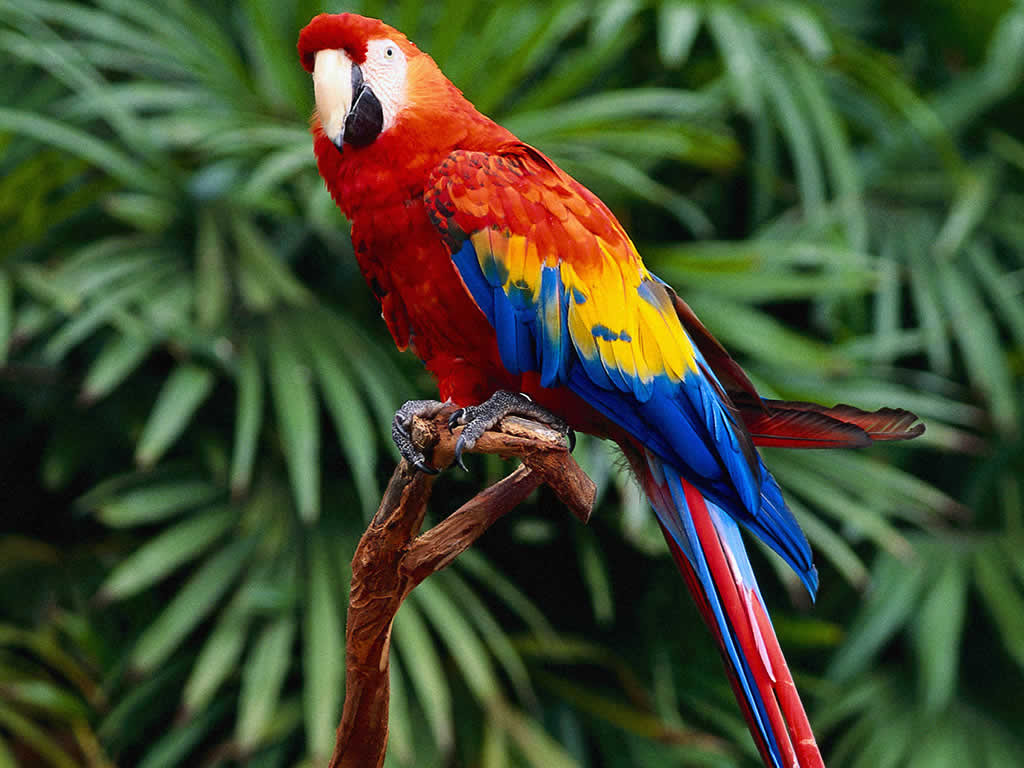 6 μήνες φυλάκιση για δολοφονία παπαγάλου