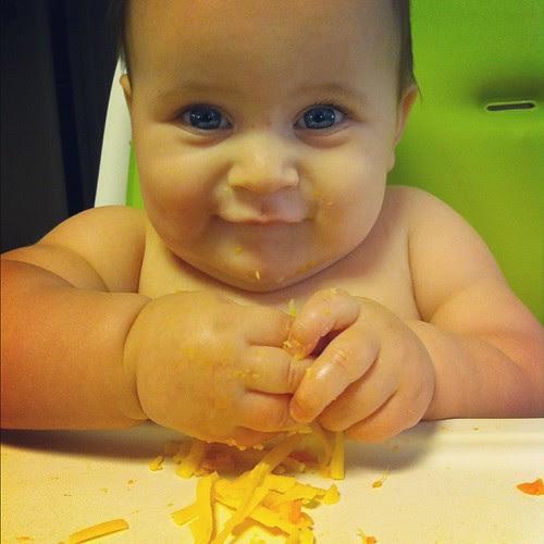 Mini Cheese Fiend @TillamookCheese