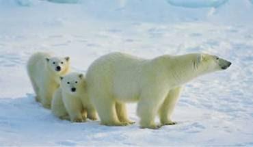 Kutuplarda Yaşayan Hayvanlar
