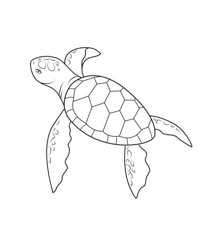 Dibujo De Bebé Tortuga Para Colorear Dibujos Para Colorear