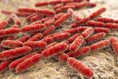 <p>Un estudio reciente en pacientes con depresión mostró que el consumo de lactobacilos (en la foto) y bifidobacterias se relacionaba con una mejora de los síntomas. Imagen: Fotolia</p>