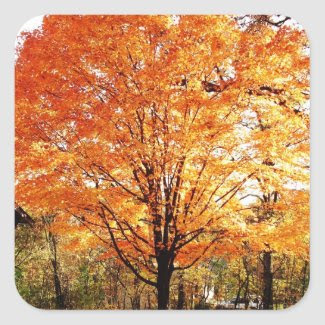 Autumn Maple Tree Sticker Stickers