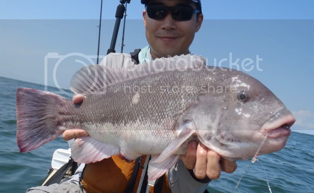 Angling addict tautog rig for Tautog fishing rigs