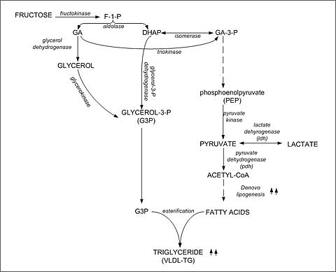 Fructose-triglyceride.jpg