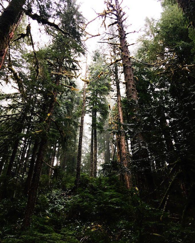 photo copyJulieOBoyle_OregonDec2017_116_zpswmgi4gwn.jpg
