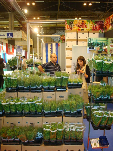 Condimentos, mejor frescos by Grupo THM, tecnologías horticultura mediterránea