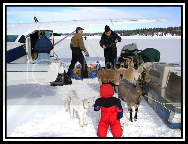 Goats arrive on plane