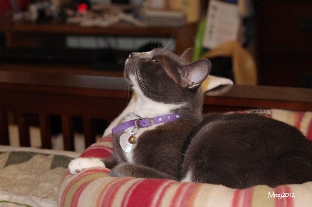 2012_09_30_2012 cats 023