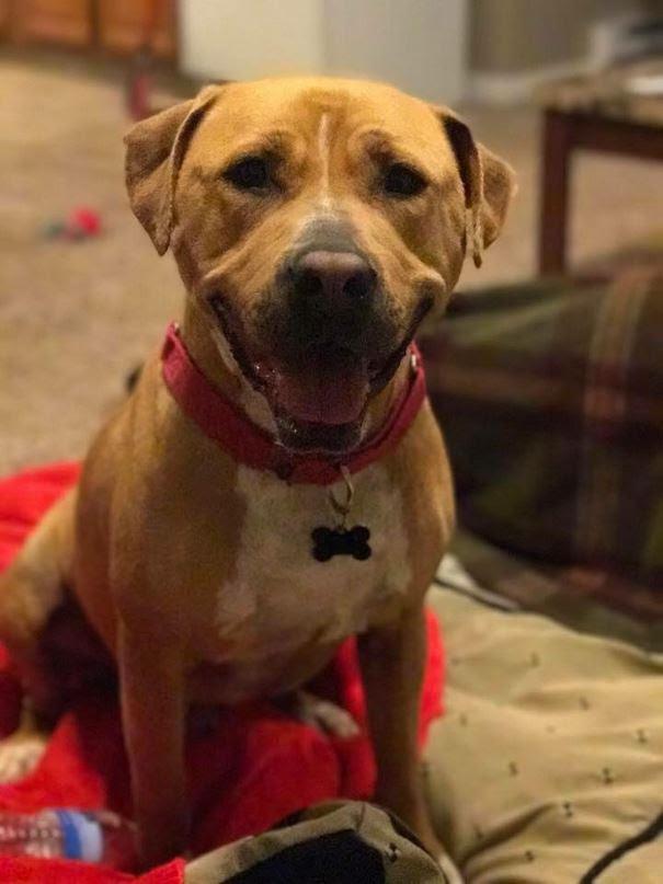 sad-shelter-dog-no-one-adopts-bear-11