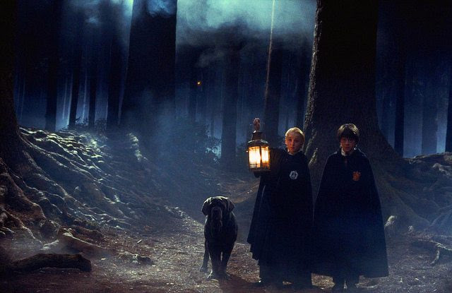 Image result for harry potter dark forest