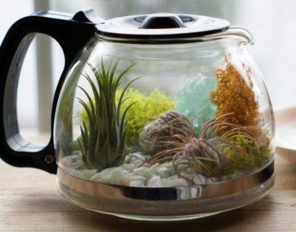 jardines-acuaticos-de-interior-10