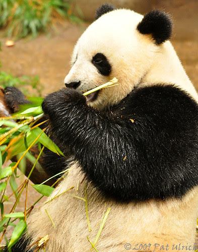 mmmm...bamboo
