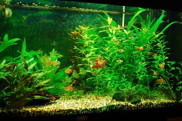 Furniture: Beautiful Home Fish Tank Looks Balalnced And Vivid Used ...