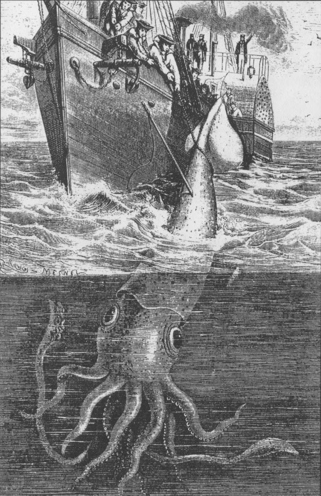 4. Giant squid considered a legend until 2001, when one of these squid was imaged.  marine life, ocean, Horror