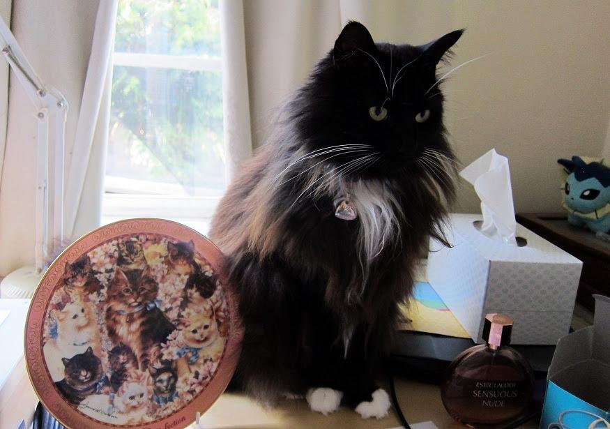 cat-plate1