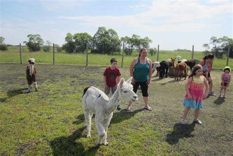 move  goat yoga alpaca dance classes  arrived
