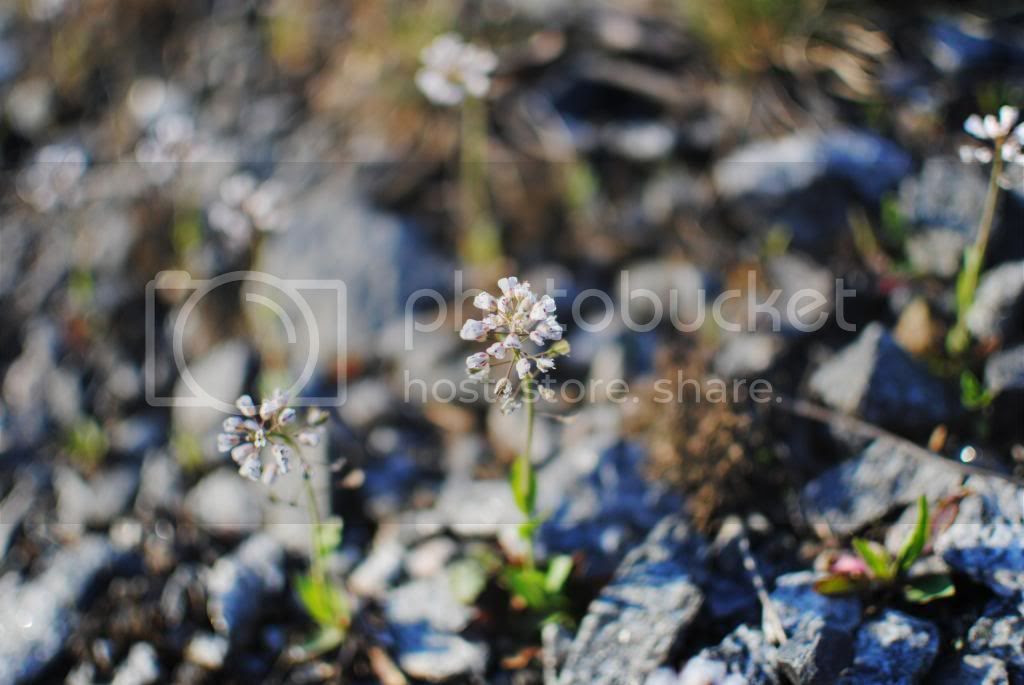 photo toukokuu501_zps0c6c6f11.jpg