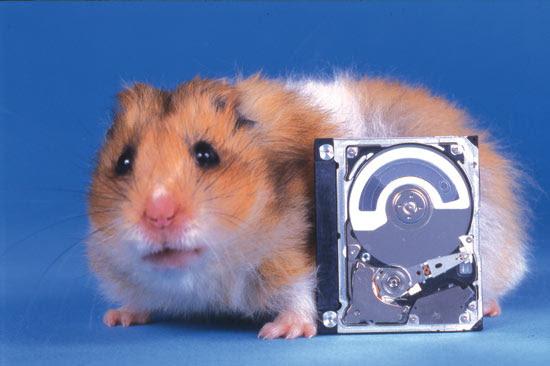 Hamsterdrive