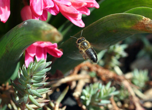 First Bee...