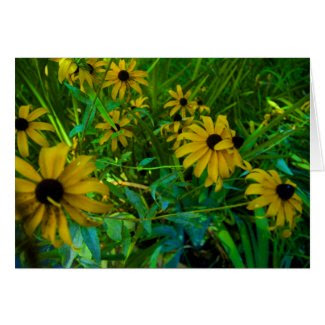 Black-Eyed Susans card