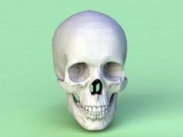 Free 3d models skull