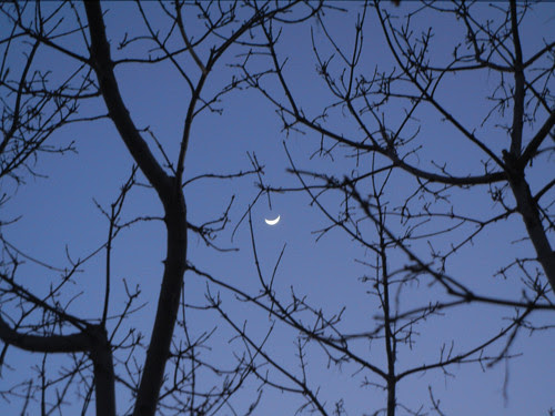 DSCN5982 _ New Moon