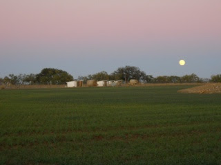 Wheat 2012 Nov 10