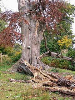 a rotting tree