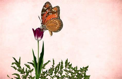 Banco de imagens : flor, floral, fundo, garden frame