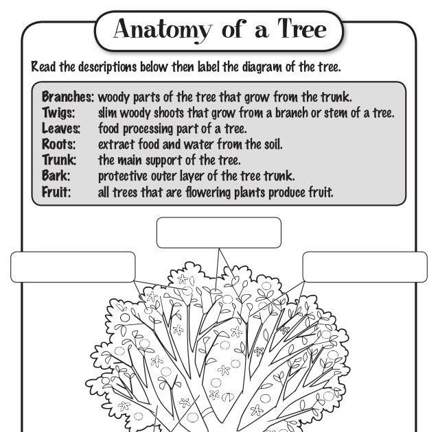 25 Parts Of A Tree Diagram