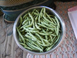 Spring 2015 Garden Green Beans