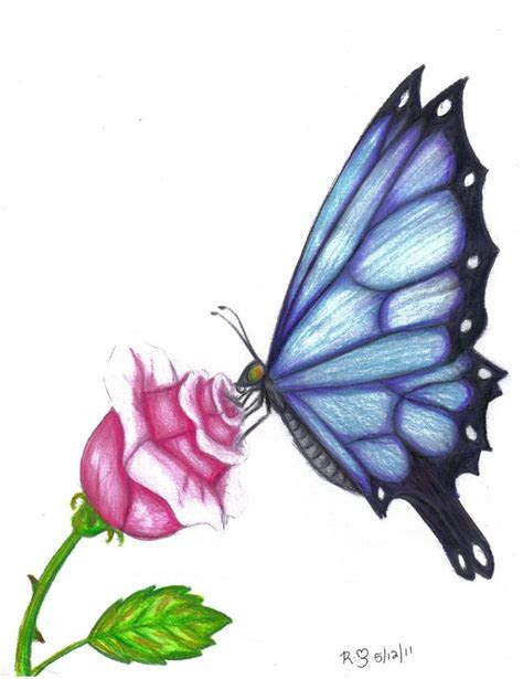 butterfly drawings  color butterfly rose  evolra