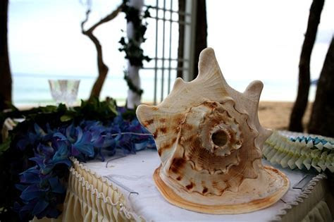 Hawaiian Conch shell used for weddings