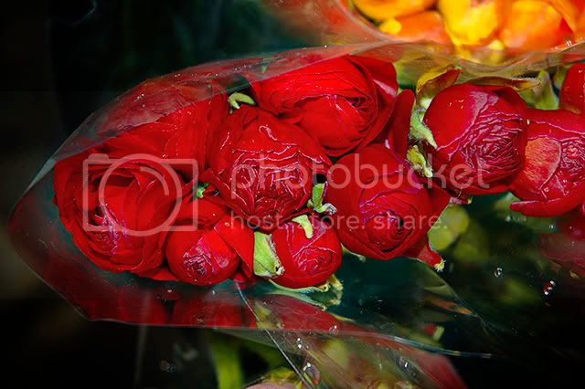 Blowing Up The Color Scale: The Seduction of Red Roses in Las Ramblas, Barcelona[enlarge]